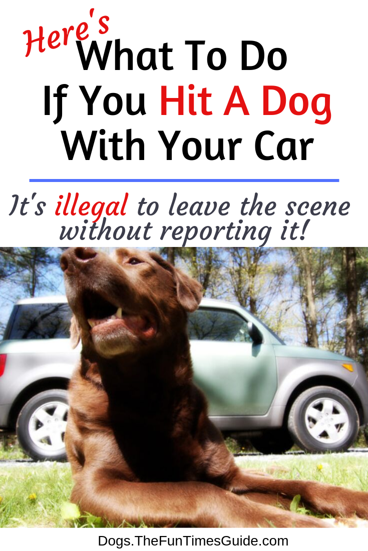 Do You Know What To Do If You Hit A Dog With Your Car?