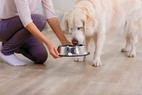 These are the steps you should follow to transition your dog from adult food to senior dog food.