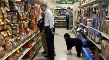 White House Dogs: The Obama Dog Is A Portuguese Water Dog