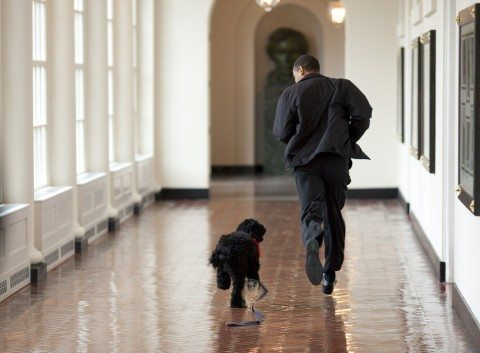 white-house-dog-bo.jpg