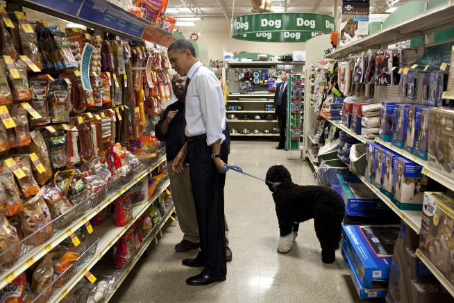 White House Dogs The Obama Dog Is A Portuguese Water Dog