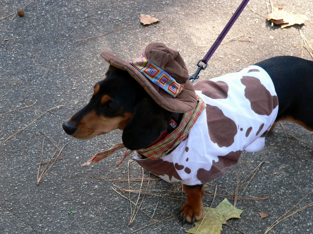 Baby And Dog Halloween Costume Ideas Cool-dog-halloween-costume-by