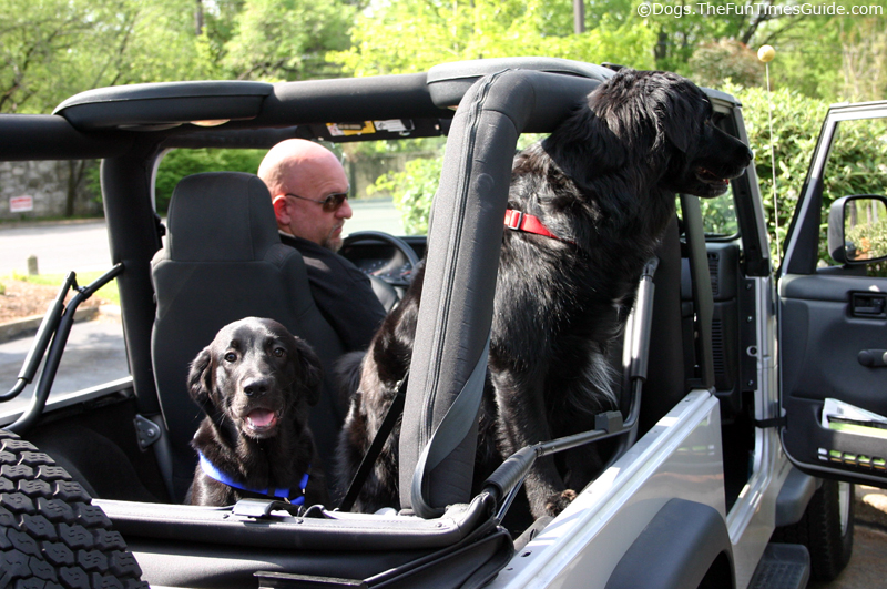 Tips For Dogs Riding In Cars Amp Jeeps Fun Times Guide To