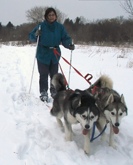 first-time-skijoring-with-dogs-by-ktpupp.jpg