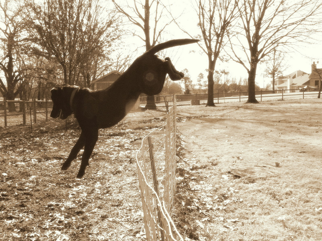 Pet Fence for Dogs, Cats | Dog Containment Systems and Fences