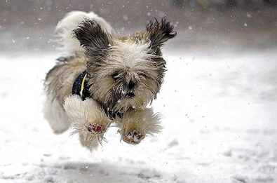 http://dogs.thefuntimesguide.com/images/blogs/leaping-snow-puppy.jpg