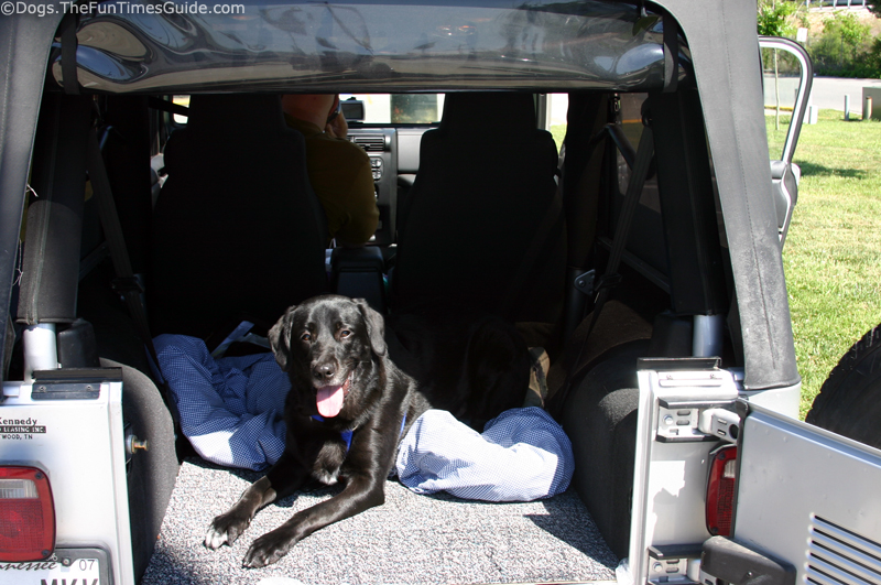 Dogs Love Jeeps Tenor Is A Jeep Dog In Training Fun